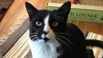 Bentley cat for blurb