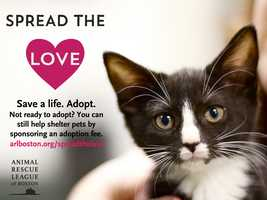 """This month, the ARL is asking animal lovers to """"Spread the Love!"""" When you adopt a pet, you save two lives: the life of the animal you adopted and the life of the homeless animal coming into the shelter from the cold. Even better, the love and devotion of a shelter pet knows no bounds! Spread the love this February by helping deserving animals find loving human companions. Click here to """"Spread the Love"""""""