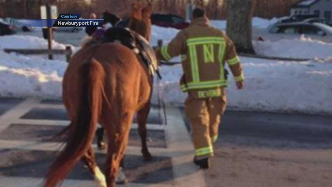 Woman rescued after horse falls on her