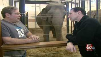 Hope Elephants, founded by Laurita, is a group of local volunteers with a dream of taking care of old and injured pachyderms.