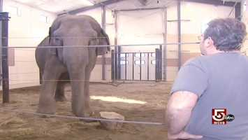 Jim Laurita and his brother both worked for a circus during college. As an elephant keeper, the future veterinarian saw that their legendary intelligence was more than a myth.