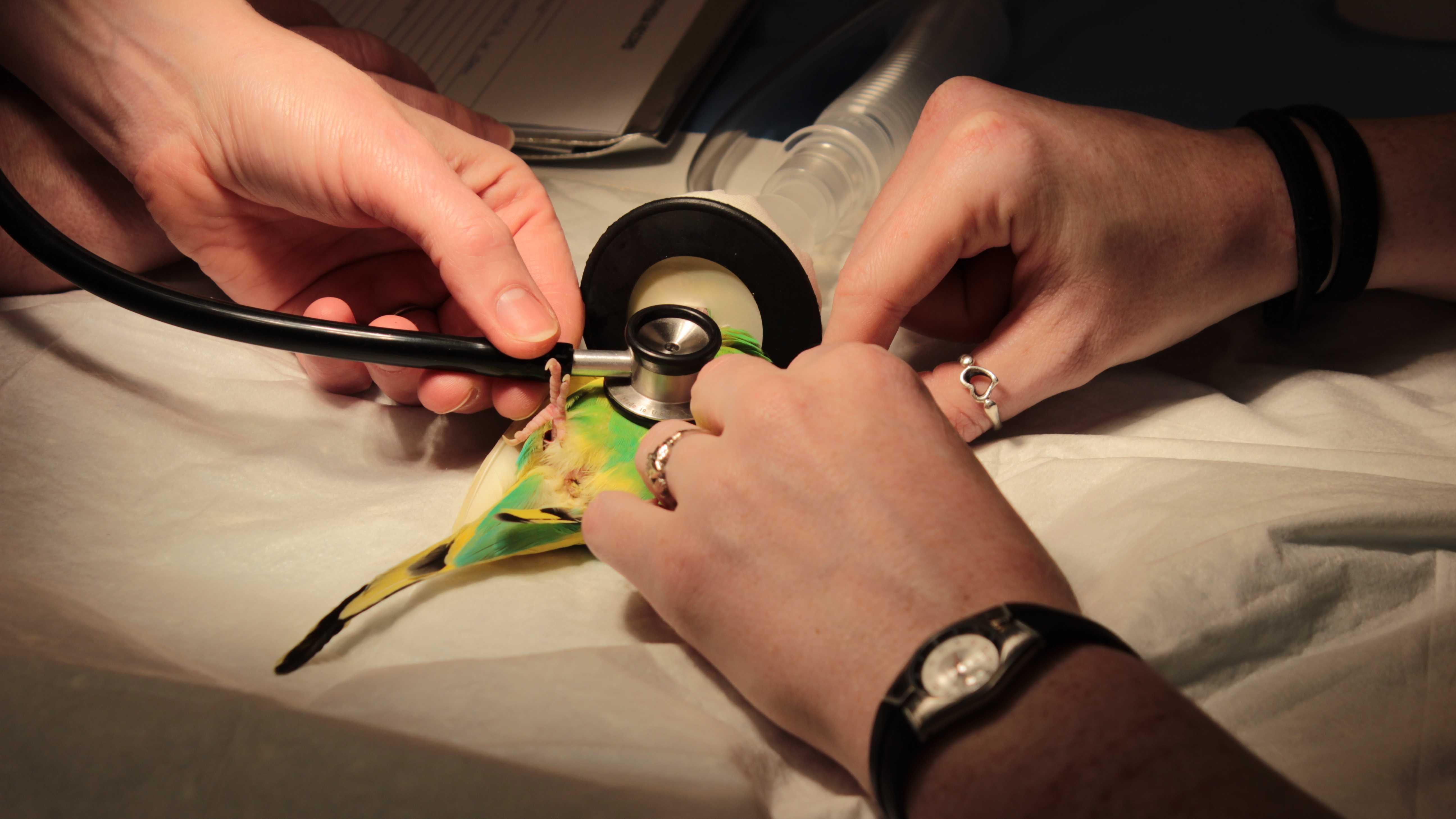 Parakeet in Vacuum cleaner 3.3.14