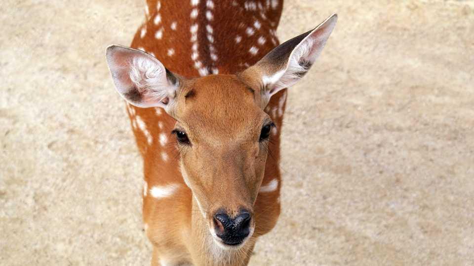 Deer03042014