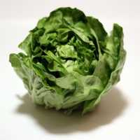 MarketWatch reported roughly 90 percent of the lettuce grown in the United States comes from California and Arizona.