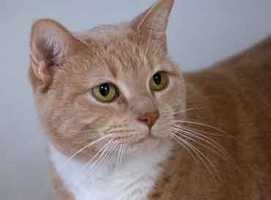 MJ is a super sweet and affectionate 3-year-old spayed female who was surrendered because her owners were moving and couldn't take her with them. She loves being petted and has lived in a house with active kids. For more on MJ, click here.