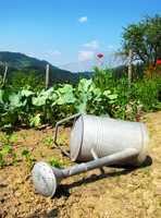 5.) You never planted a garden.