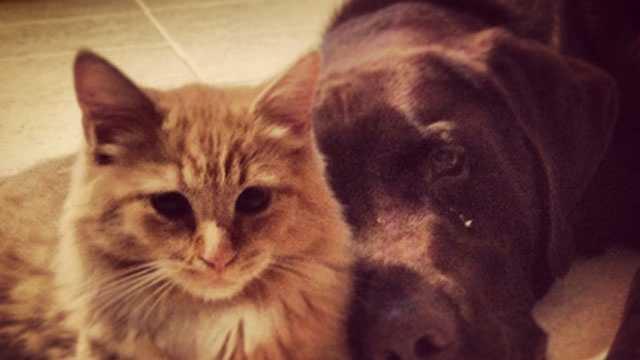 Cat, dog, pet, pets generic