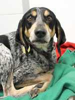 My name is Bailey! For more information about me, please call or visit the shelter. Buddy Dog Humane Society, Inc. Sudbury, MA (978) 443-6990 or info@buddydoghs.com