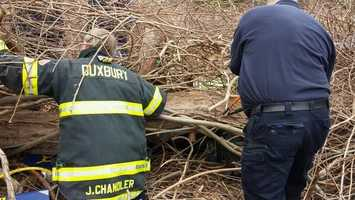 A man had to be rescued Friday after a tree fell on him in Duxbury.