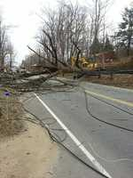 Three young men were trapped in a car Monday afternoon after a large tree fell onto utility lines in Leicester.