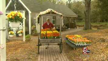 Also on 6A in Dennis is a thriving produce farm.