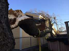 A tree came down during the strong winds and landed on a house in Salem Thursday afternoon.
