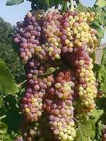 3. Grapes