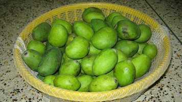 44. Mangoes