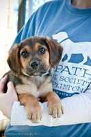 Zeke is almost 3 months old and is looking for a new home! He is a hound mix who has been neutered. To meet Zeke, click here.