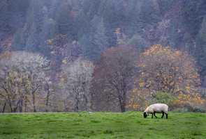 1.) Oregon