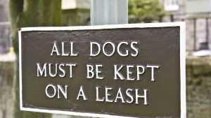 DogOnLeash050714