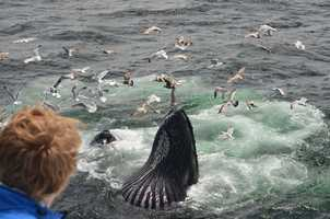 About 900 humpbacks are in the area.