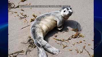 A little harbor seal pup was rescued off the coast of New Hampshire on Tuesday.