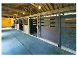 Turn-out shed with ample paddock space