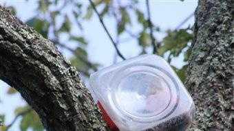 Bear in cookie jar 7.2.14