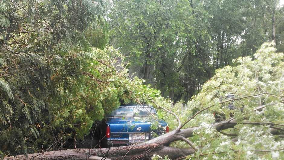 Billerica tree 070314.jpg
