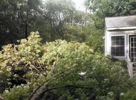 A fallen tree in Billerica