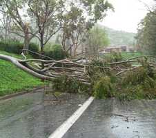 Trees were also knocked over in Lawrence.