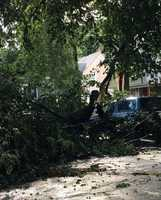 More trees down in Lawrence.
