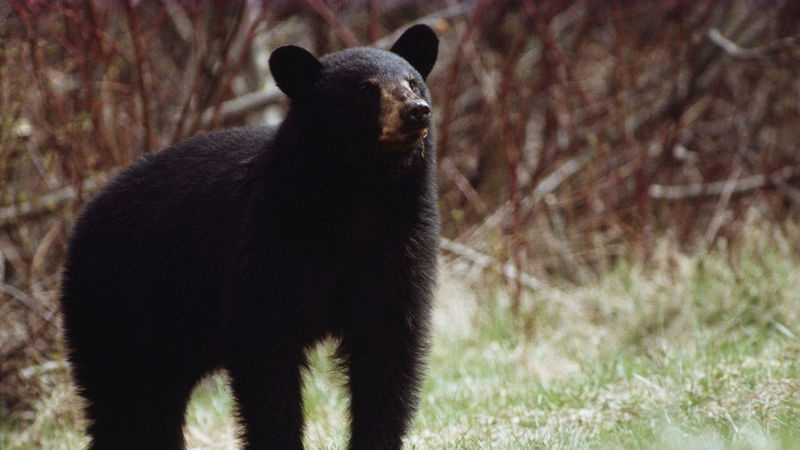 Generic Bear 0704.jpg