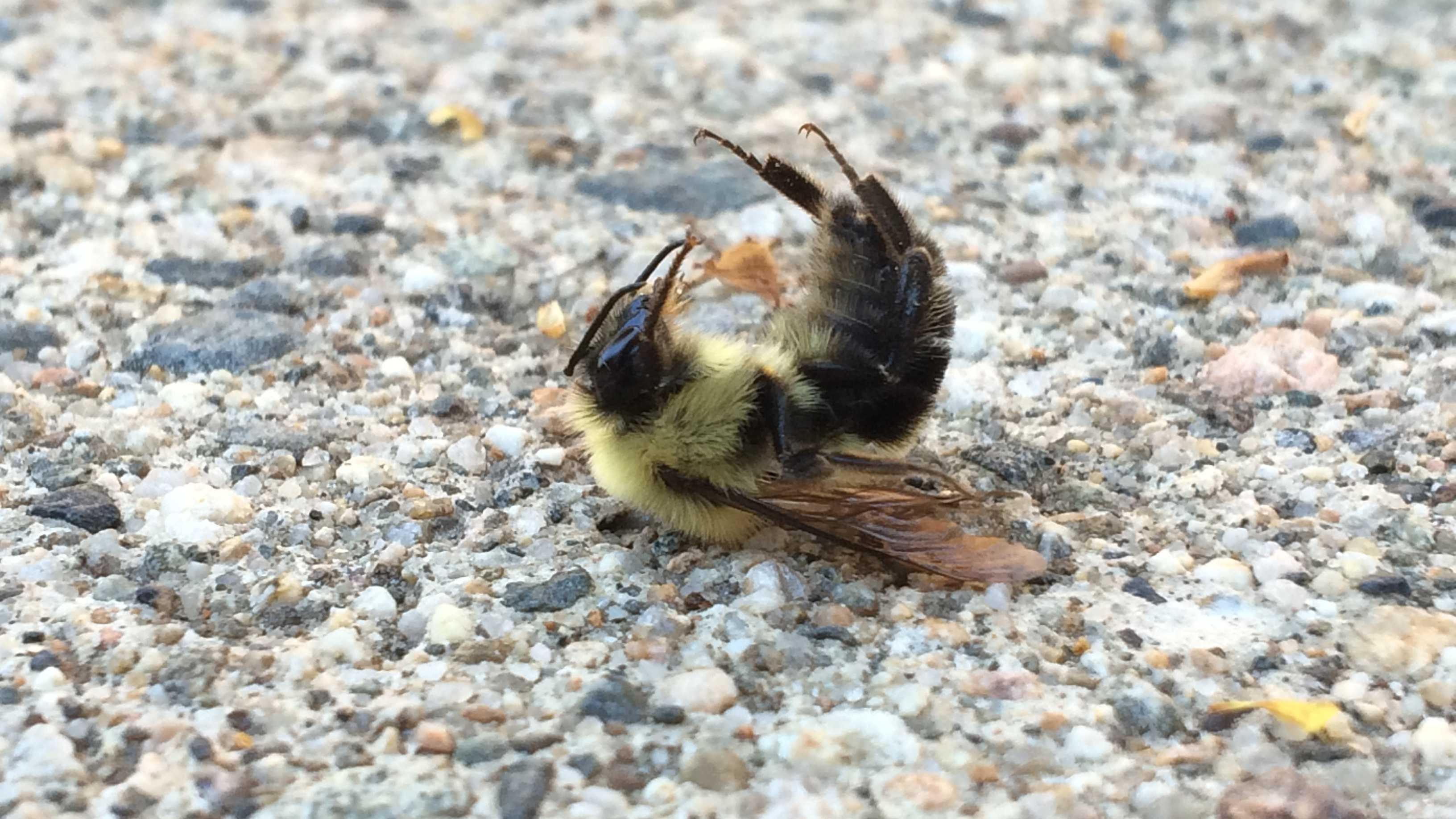 Bees killed 0709.jpg