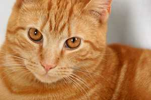 Depending on the pet's exposure risk, vaccination requirements can vary.