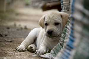 There are some things about owning a pet you should know. This list comes to us from Market Watch.