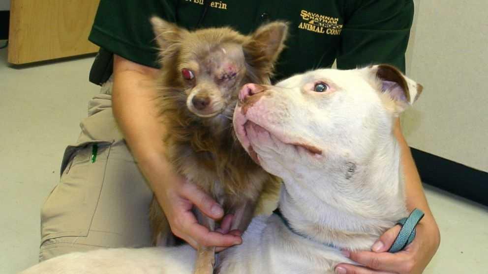 Dog rescue 7.24