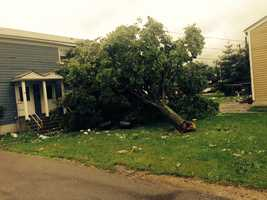 A tree is down in Revere.