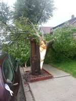 Tree snapped in half in Revere.