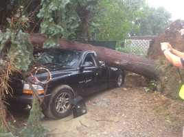 The tornado brought a tree down on a truck in Revere.