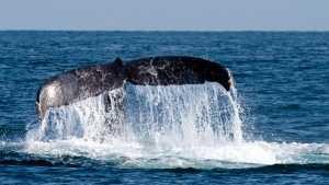 WhaleFin0728