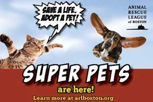 """The ARL finds homes for about 3,000 animals every year, including cats, dogs, birds, bunnies, ferrets, cows, sheep, horses, snakes, and lizards. They take in animals from a variety of circumstances, but a large portion are surrendered because of """"people-related"""" reasons—their owners were moving, had no time because of a job or life change, or suddenly became sick or financially unable to care for them."""