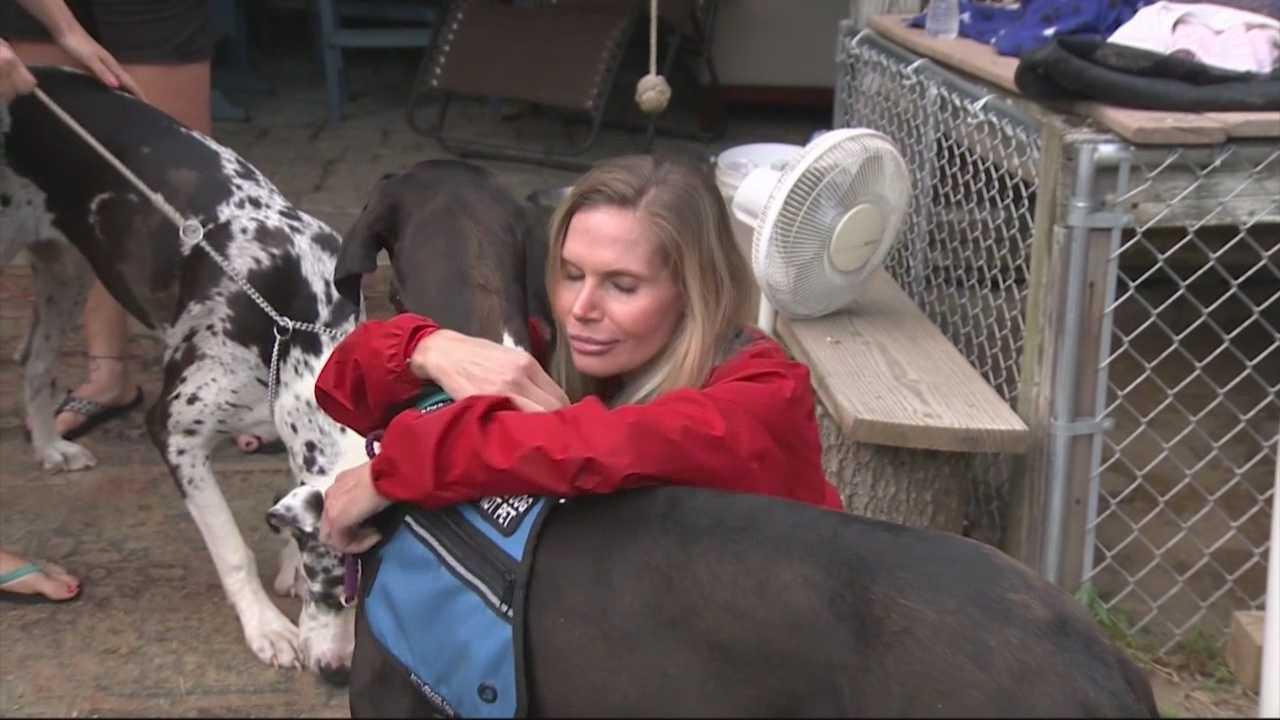 Dog of Boston Marathon bombing survivor returns home