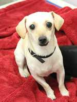 My name is Princess! I am new here, so please call the shelter for more information about me! Buddy Dog Humane Society, Inc. Sudbury, MA (978) 443-6990 or info@buddydoghs.com