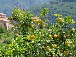 Lemon juice is a natural weed killer.