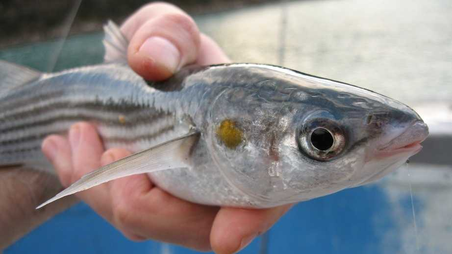 Safest fish to eat fish to avoid for Fish therapy near me