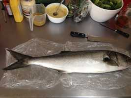 Fish to avoid: BluefishMinimize your mercury intake by limiting consumption of this fish.