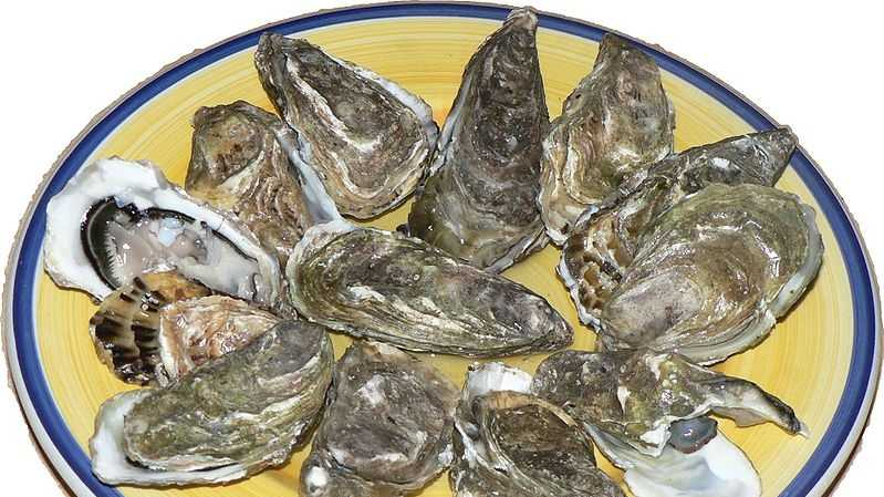 799px-Oysters_p1040741.jpg