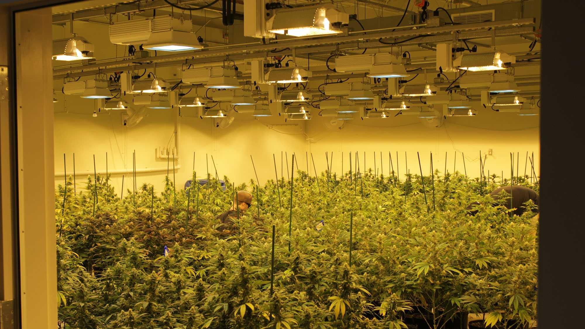 medical marijuana lowel cultivation patriot care columbia care (13).JPG