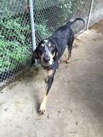Victor Joe. Calling all Blue Tick Coonhound lovers, we have the perfect one for you! Victor Joe is a 6 year old mellow man. He has a very calm personality and has become the shelters favorite. Victor Joe is very good with other dogs and children and even ignores the resident shelter cat. He would love a home where he can play in the yard, sleep in a soft bed, get lots of love and attention and did we mention he makes the perfect co-piolet in the car.  MORE