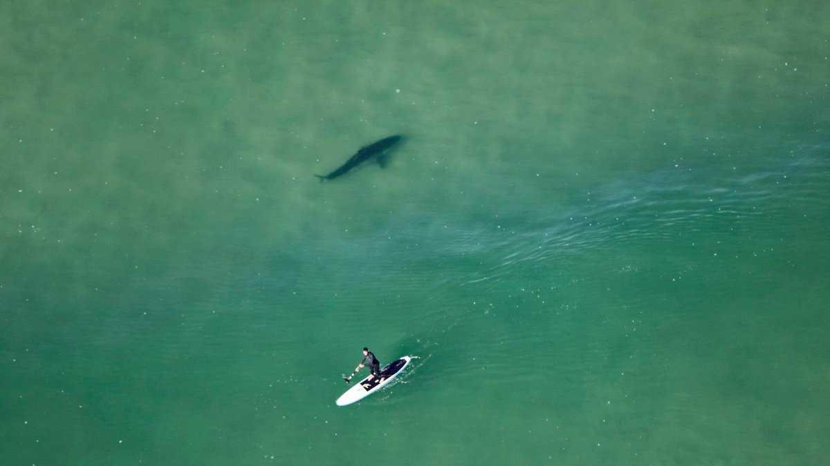 Paddleboard shark.jpg
