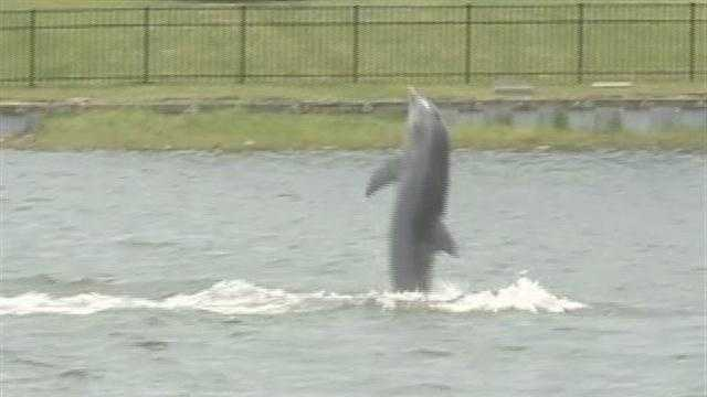 Slidell residents discuss dolphin's future