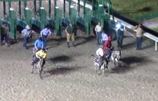 The Zebra Zip played to a packed house at the Fair Grounds race track.